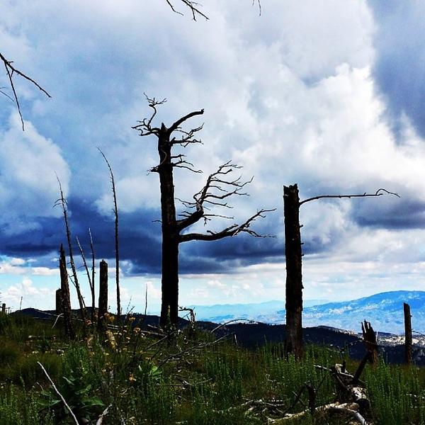 "#tucson#az#arizona#igerstucson#instagramaz #az365#azgrammers#instaaz#igersaz#igersarizona #azcentral#arizonalife#aznature#azscenery #desertscenery#azdesert#clouds#sky #catalinamountains#azwx #mtlemmon via Instagram <a href=""http://instagram.com/p/hvxMl9iiue/"">http://instagram.com/p/hvxMl9iiue/</a>"