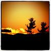 Two friends swaying and enjoying some golden light. #sunset #btv #VT #milton #landscape