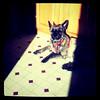 The dog wants a sun tan. #dog #canine #pet #sun