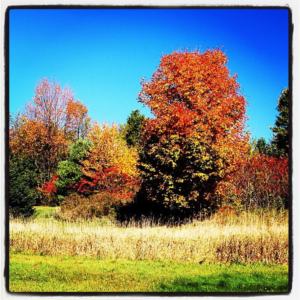 Beautiful scenery on a good day! #milton #btv #leaves #vt #foliage