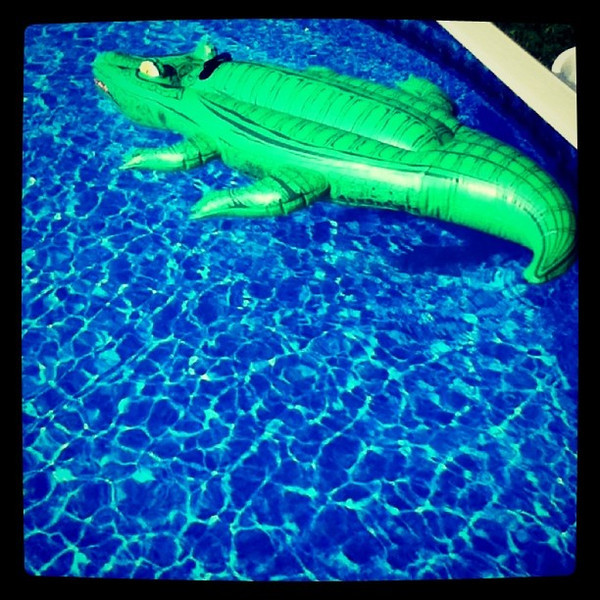 Watch out for the gator! #pool #toy #swimming #summer