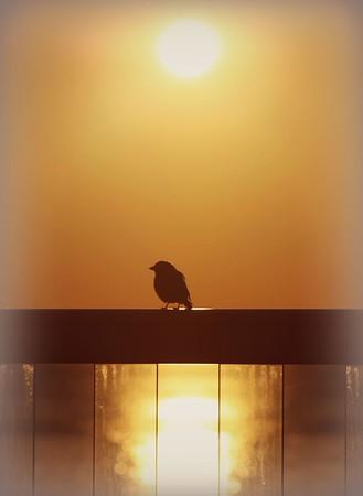 Early bird.