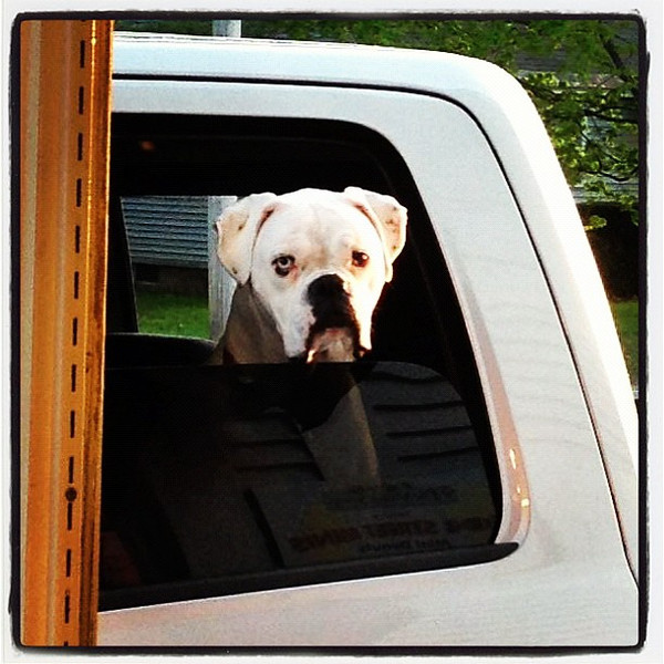 How Much Is That Doggy In The Window? #btv #vt