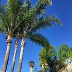 Rain weekend in #sandiego via Instagram http://ift.tt/1zqWlcM