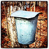 This is how it all starts! #maple #syrup #sap #Milton #btv #VT