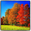 Standing tall in color. #foliage #milton #btv #vt