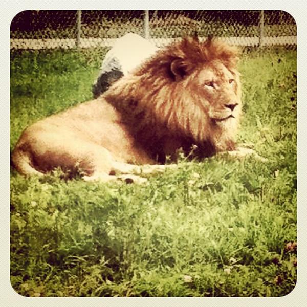 The King! #parcsafari #quebec