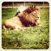 The King! #parcsafari #quebec