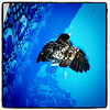 Baby Robin taking a swim in my pool. Rescued. No #birds were harmed in this production. #pool