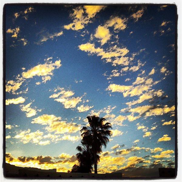"""#tucson #arizona #az #igerstucson #instagramaz #sky #clouds #palm via Instagram <a href=""""http://instagram.com/p/Y9C23Fiih7/"""">http://instagram.com/p/Y9C23Fiih7/</a>"""