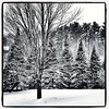 Just Black & White when it snows. #miltonvt #vt