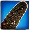 "#tucson #az #saguaro #cactus via Instagram <a href=""http://instagram.com/p/YzLb-VCinJ/"">http://instagram.com/p/YzLb-VCinJ/</a>"