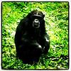 Monkey face!