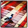 Little wet birdie! #btv #bird #pigeon