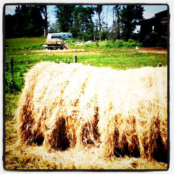 Hay is for horses!