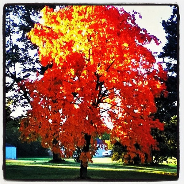 What I saw this morning which made me pull over. #milton #btv #vt #foliage #fall