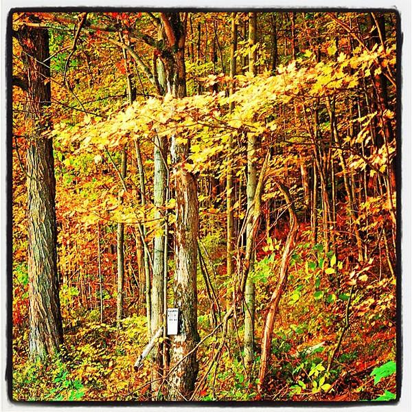 No Trespassing in the #foliage please!  #milton #btv #vt
