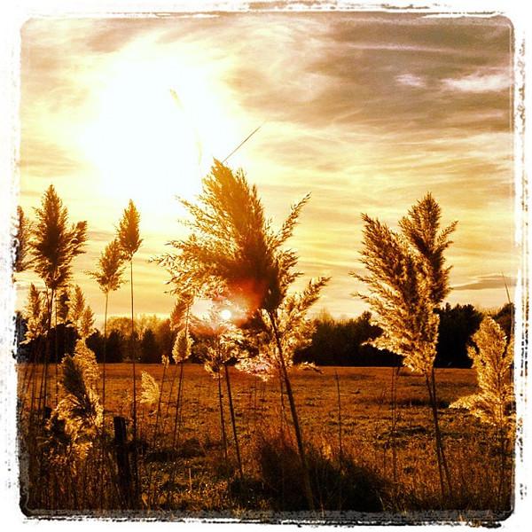 Basking in the #sunset. #btv #milton #vt