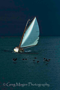 Sailboat and Scoters