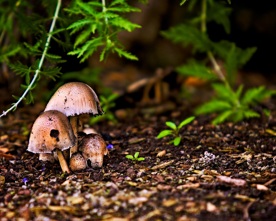 Some mushrooms, and a test of the st-e2 transmitter