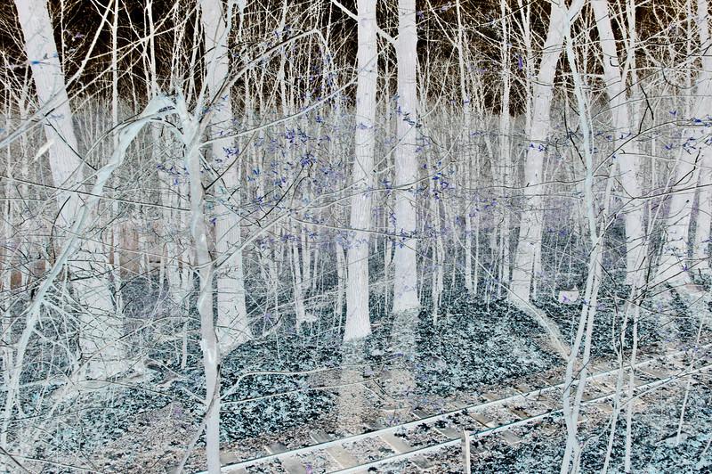 Woods, Pond  & Rail Negative