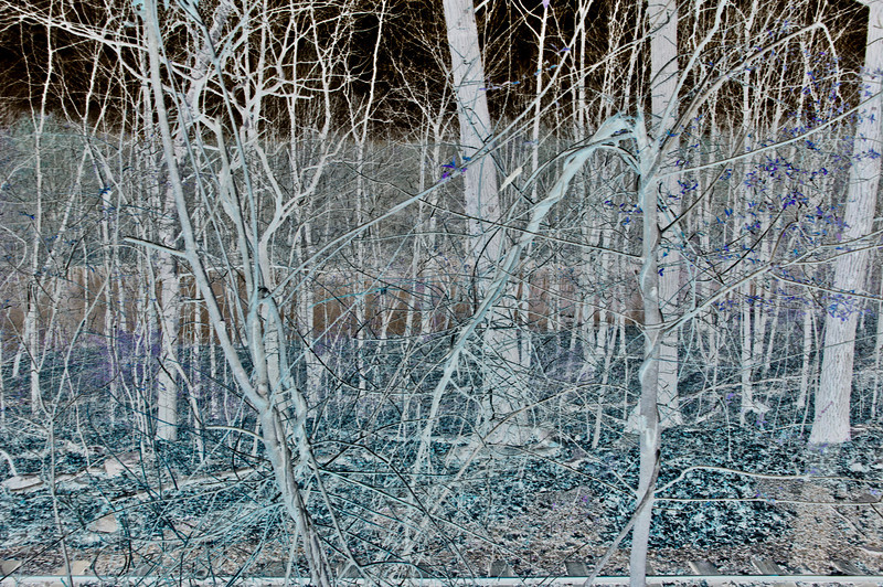 Woods & Pond Negative