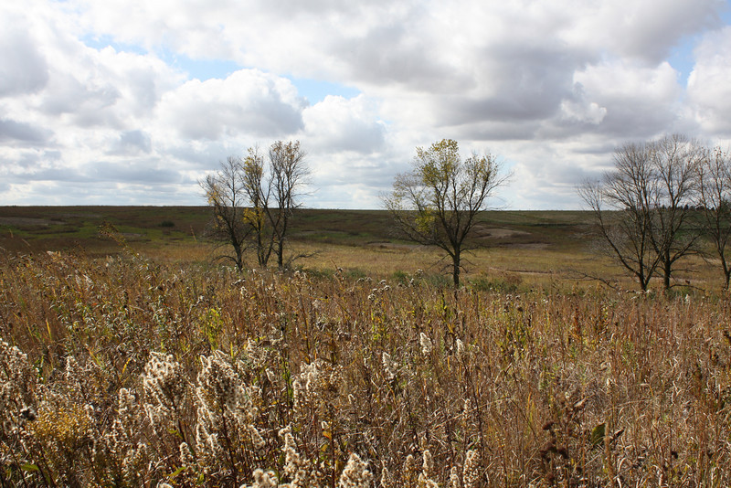 Tall-grass prairie outside West Branch, IA