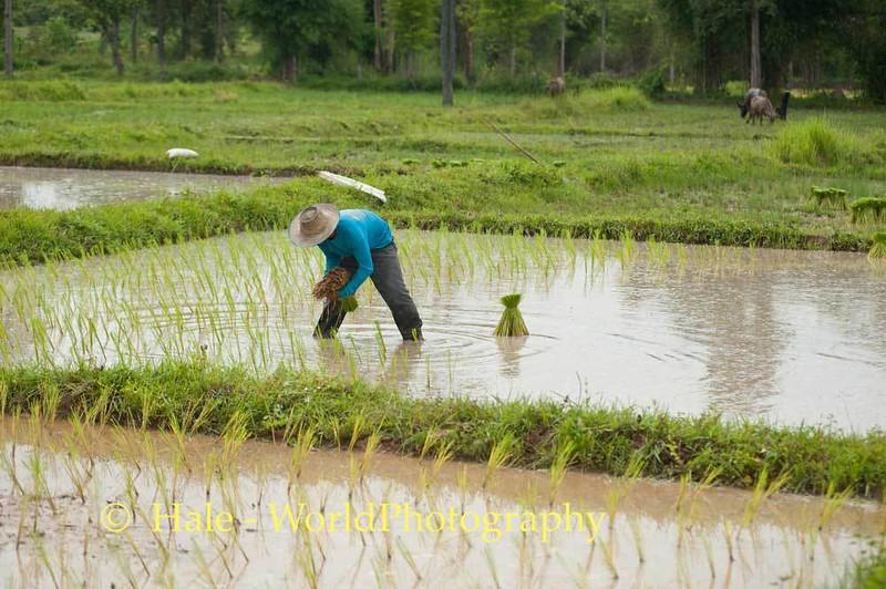 Stoop Labor In Thailand