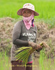 Female Lao Loum Rice Farmer