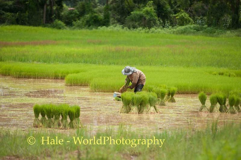 Harvesting Plants for Transplantation