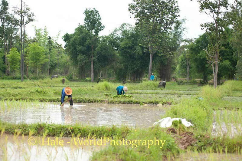 Toiling Away In Northeast Thailand