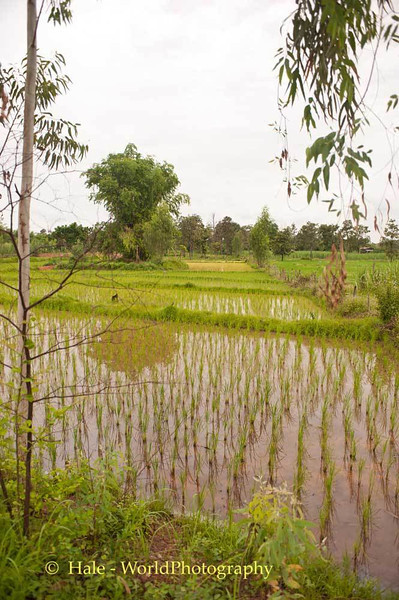 Isaan Countryside in Late July