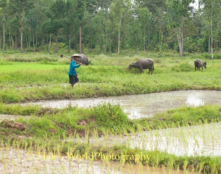 Farming in Northeast Thailand