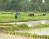 Farming in Northeast Thailand