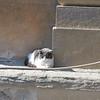 Pitti kitty