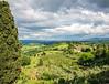Chianti on the Vine_8000459