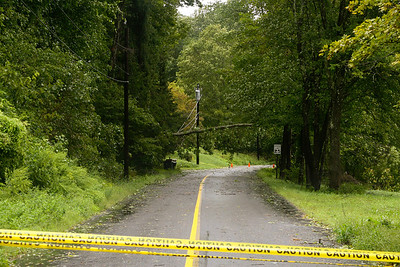 tree across wires.. Hurrican Irene