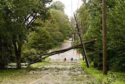 tree across wires in Seymour with people who walked UNDER it while walking thier dogs...