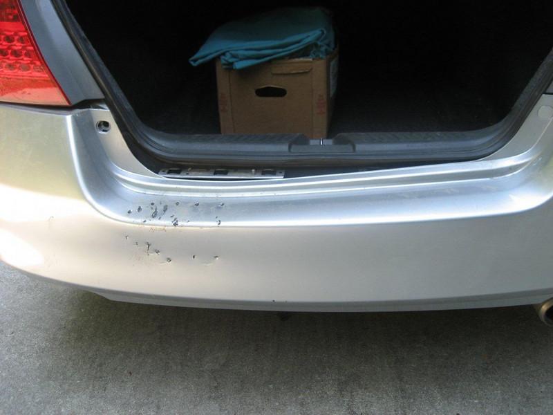 A bear pulled the bumper off Jill's car.