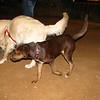 Choco (puppy girl)_002