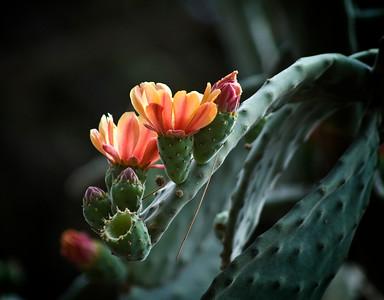 CactusRotate1