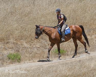 Jack Brook Horse Camp 2013