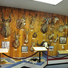 Wall display of African big game at the O'Connor Center in Lewiston.