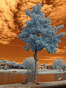 Jarboe Park in Infrared