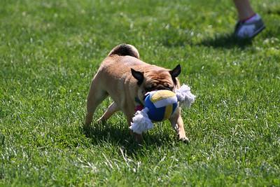 Jake-puppypark-5-2008