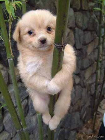 bamboo puppy