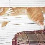 b lind cat