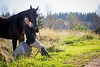 janet horse 2014 web-7954