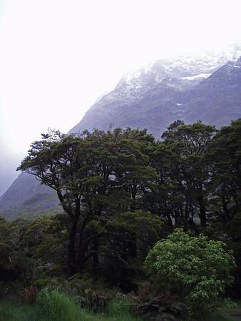 January 2010 - Southern NZ