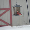 A dinner guest at my feeder. It's going to be rough for this little guy over the next few days!<br /> <br /> Photographer's Name: Dwayne Smith<br /> Photographer's City and State: Alexandria, Ind.